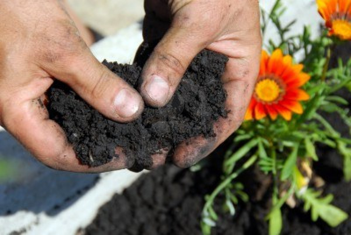 10427555-black-soil-for-planting-flowers-in-man-hands-closeup